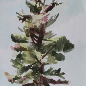 Pine Tree Watercolor