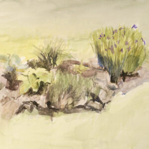 Watercolor of Iris and others in backyard